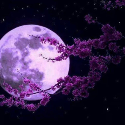 lavender_full_moon