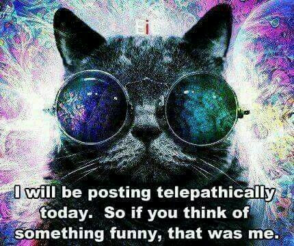 CAT-TELEPATHY