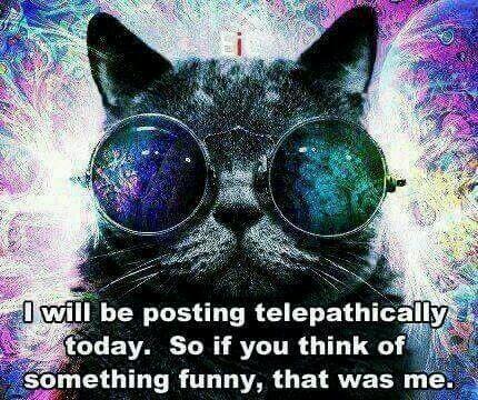 CAT-TELEPATHY