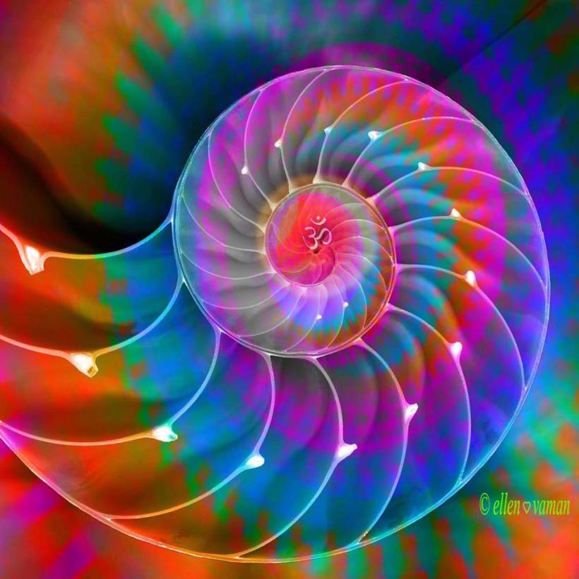 rainbow_nautilus