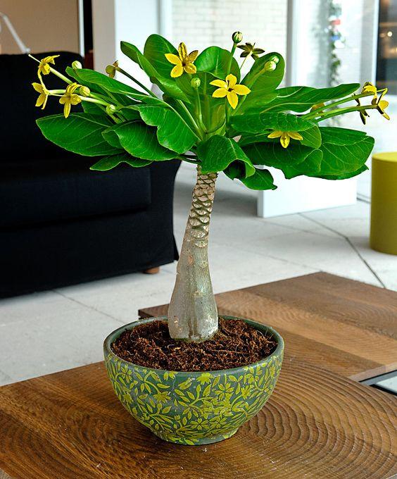 hawaiian-palm