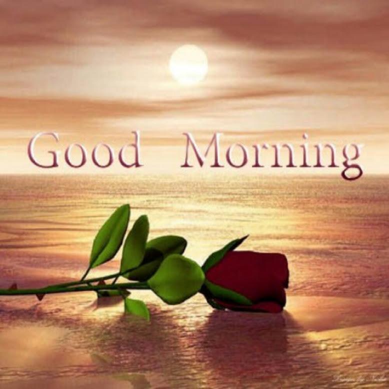 morning-rose