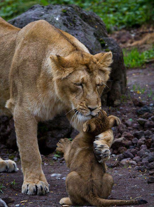 Mom-Cub