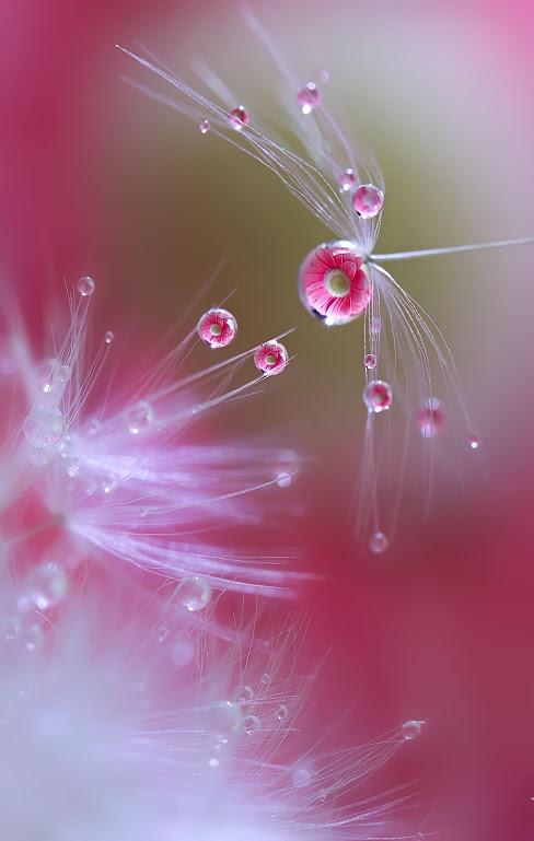 tiny-pink