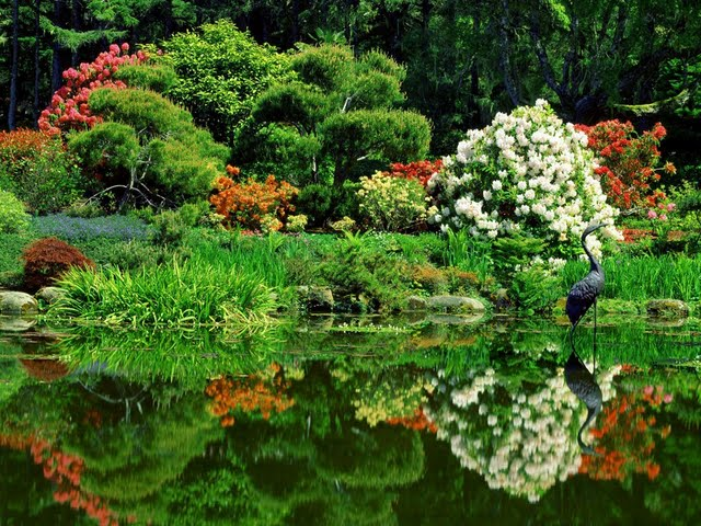 treasures-of-the-earth-worldwide-natural-landscapes-photography-vol02-oriental-garden-shore-acres-state-park-oregon--wallpaper-45789