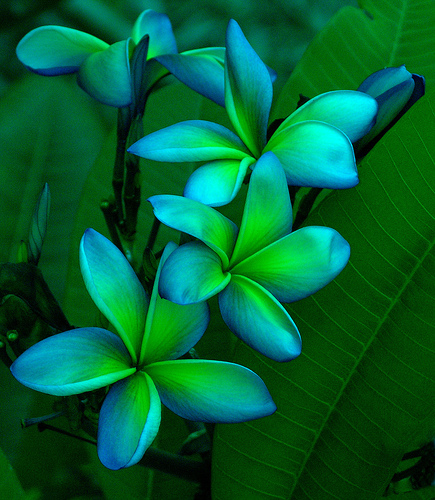 Tropical-Flowers-4