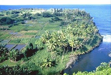 The kalo lo'i in the Hana District ... taro patches of Keanae, Mau'i, Hawai'i
