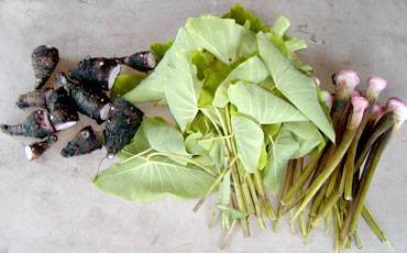 Every part of Kalo can be used as either food or medicine.