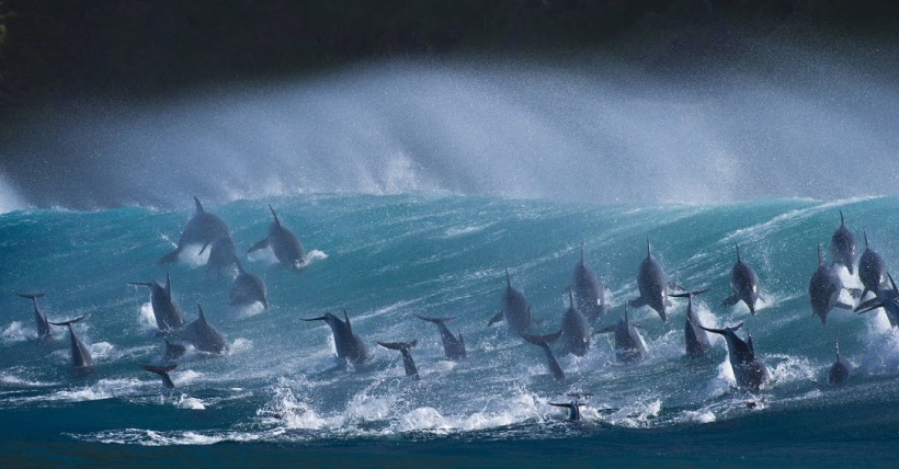 dolphins_surf