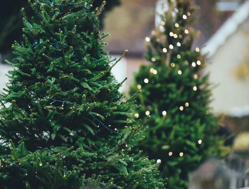 christmas-tree-1149919_1280