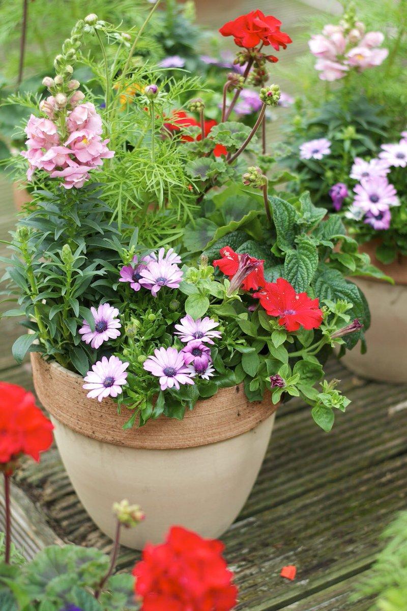 pour-ceux-qui-aime-les-plantes