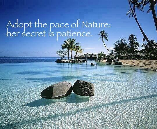 aloha-patience