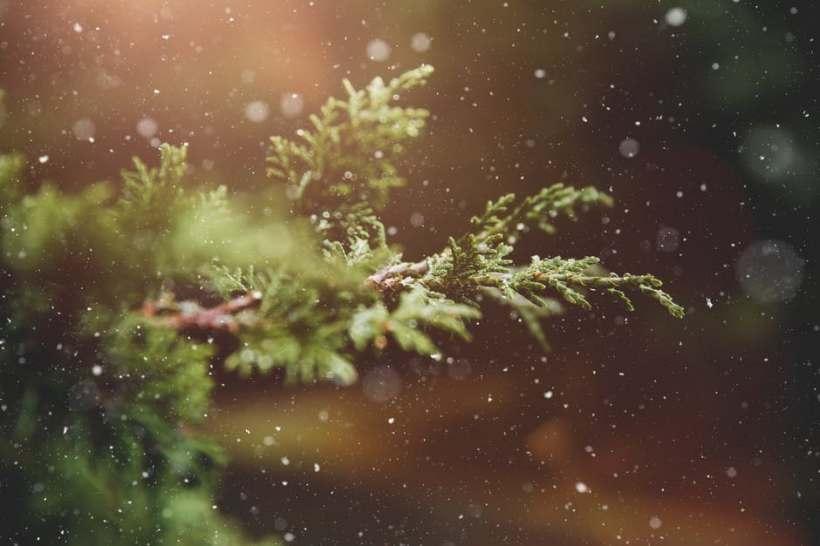 juniper winter