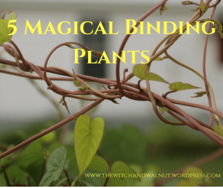 5 Magical Binding Plants