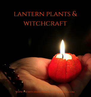 lantern plants & witchcraft