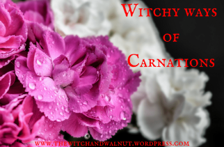 a-witch-her-carnations1.png