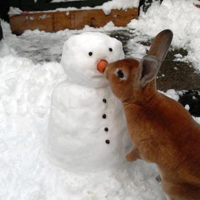 bun and snowman