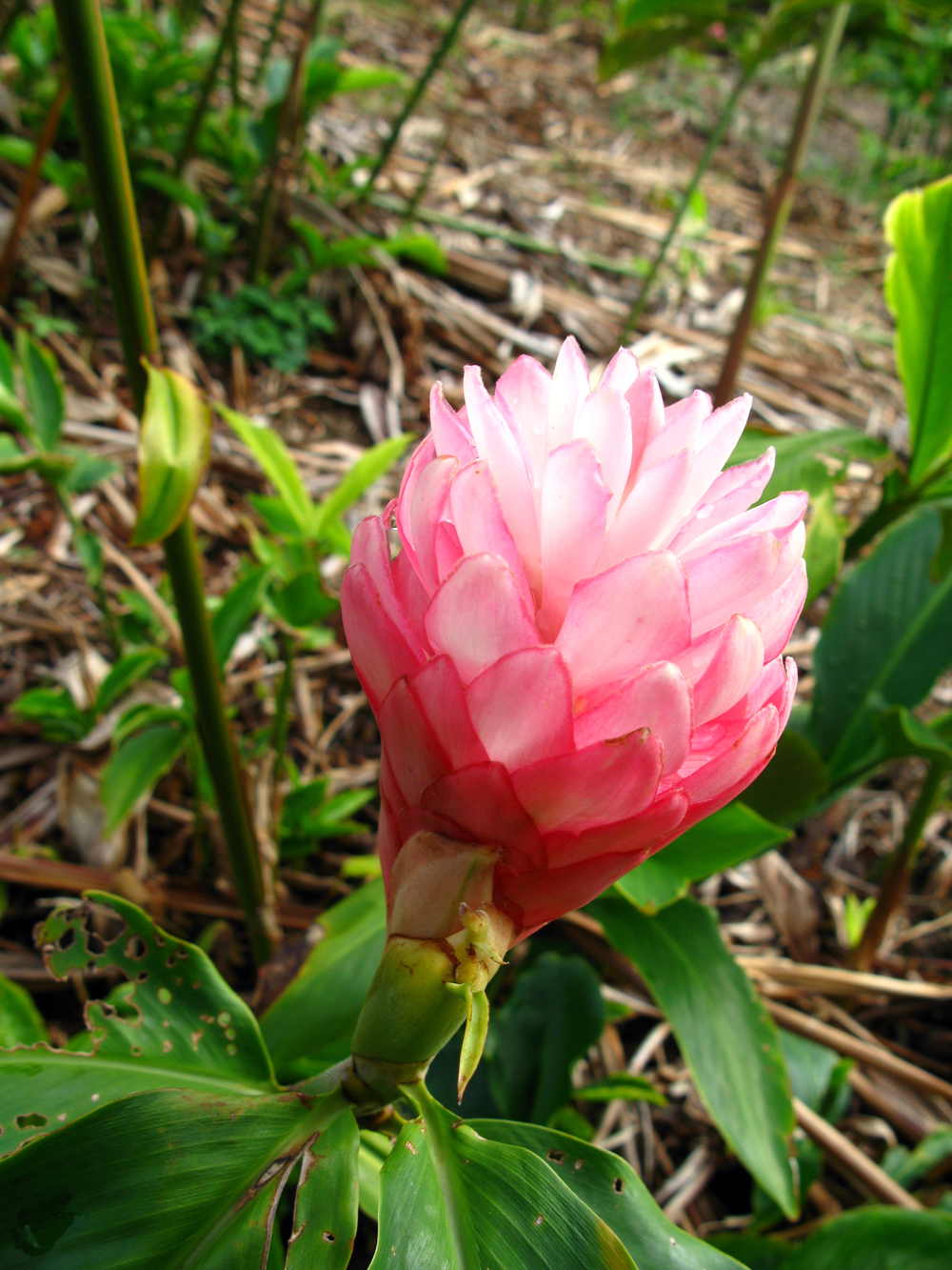 Tropical Flowers – Wailea Agricultural Group
