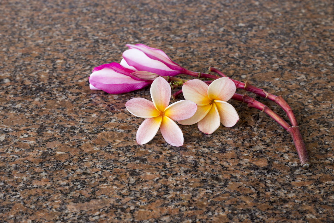 An Alphabetical List of Tropical Flower Names With Facts ...