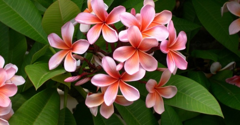 Tropical Flower Symbolism: Spiritual Meanings of Hawaiian ...
