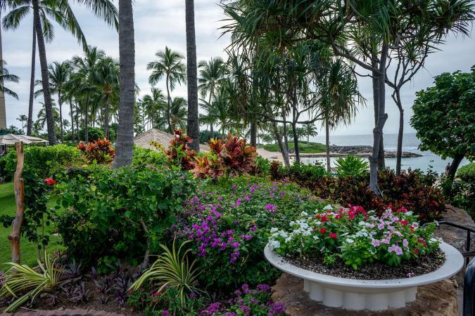 Growing Tropical Flowers | LoveToKnow