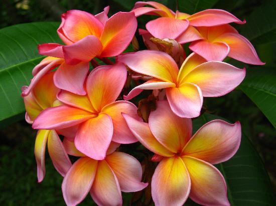 Hawaiian Lei Traditions | Kauai Kolea
